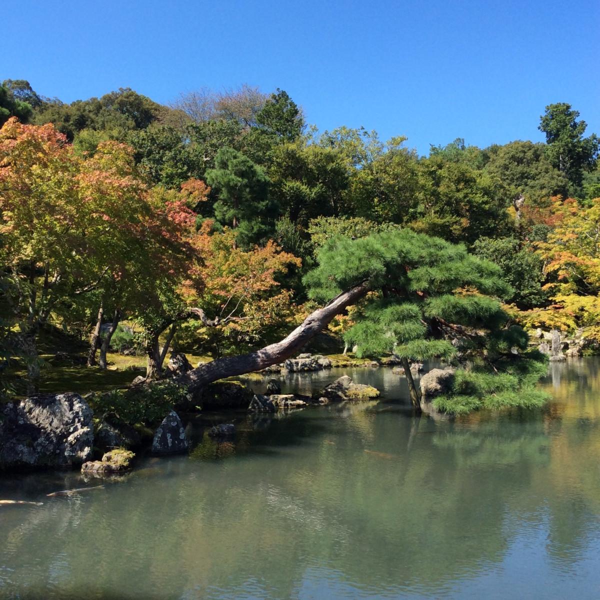 Kyoto-Japan-150