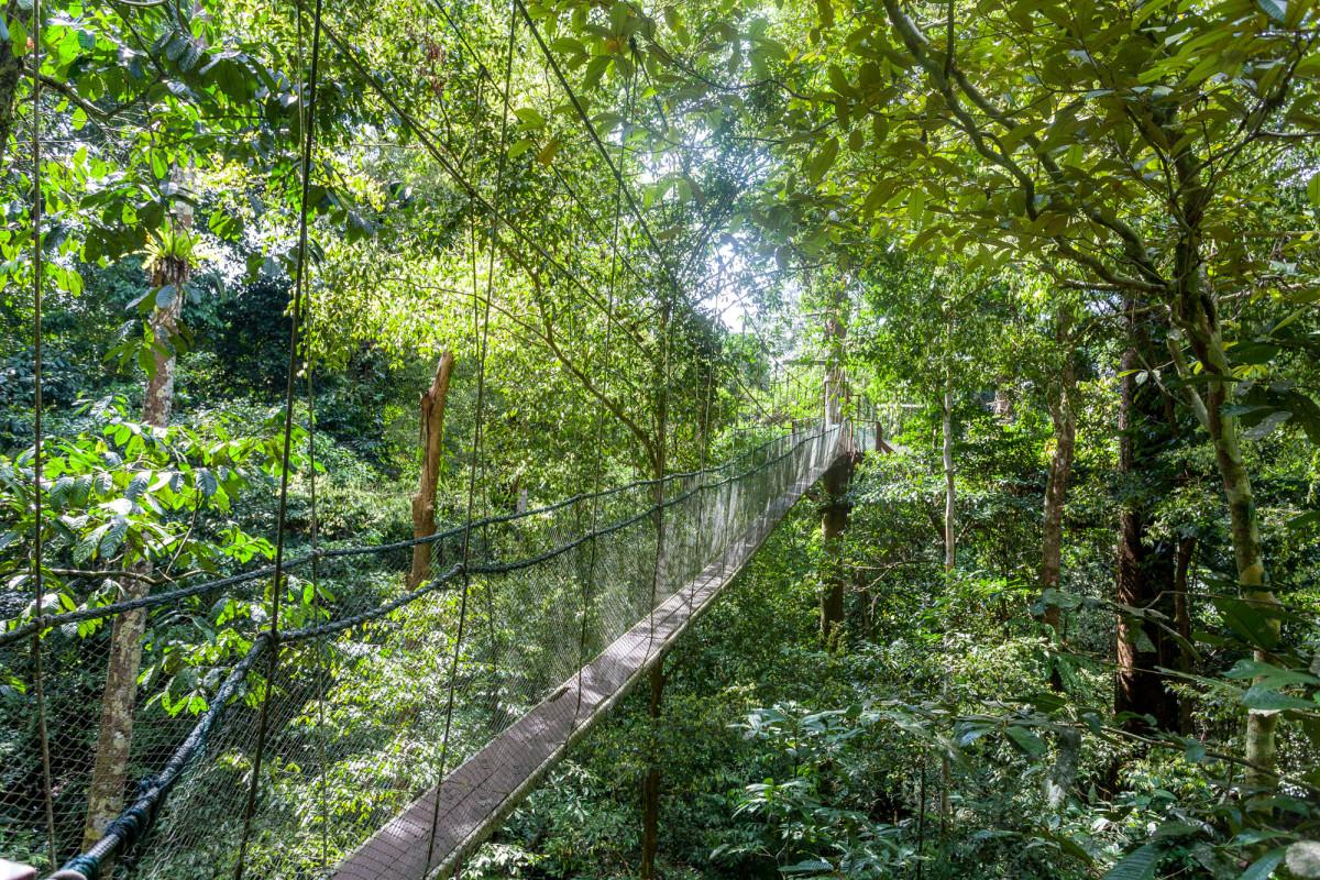Gunung-Mulu-National-Park-Borneo-20