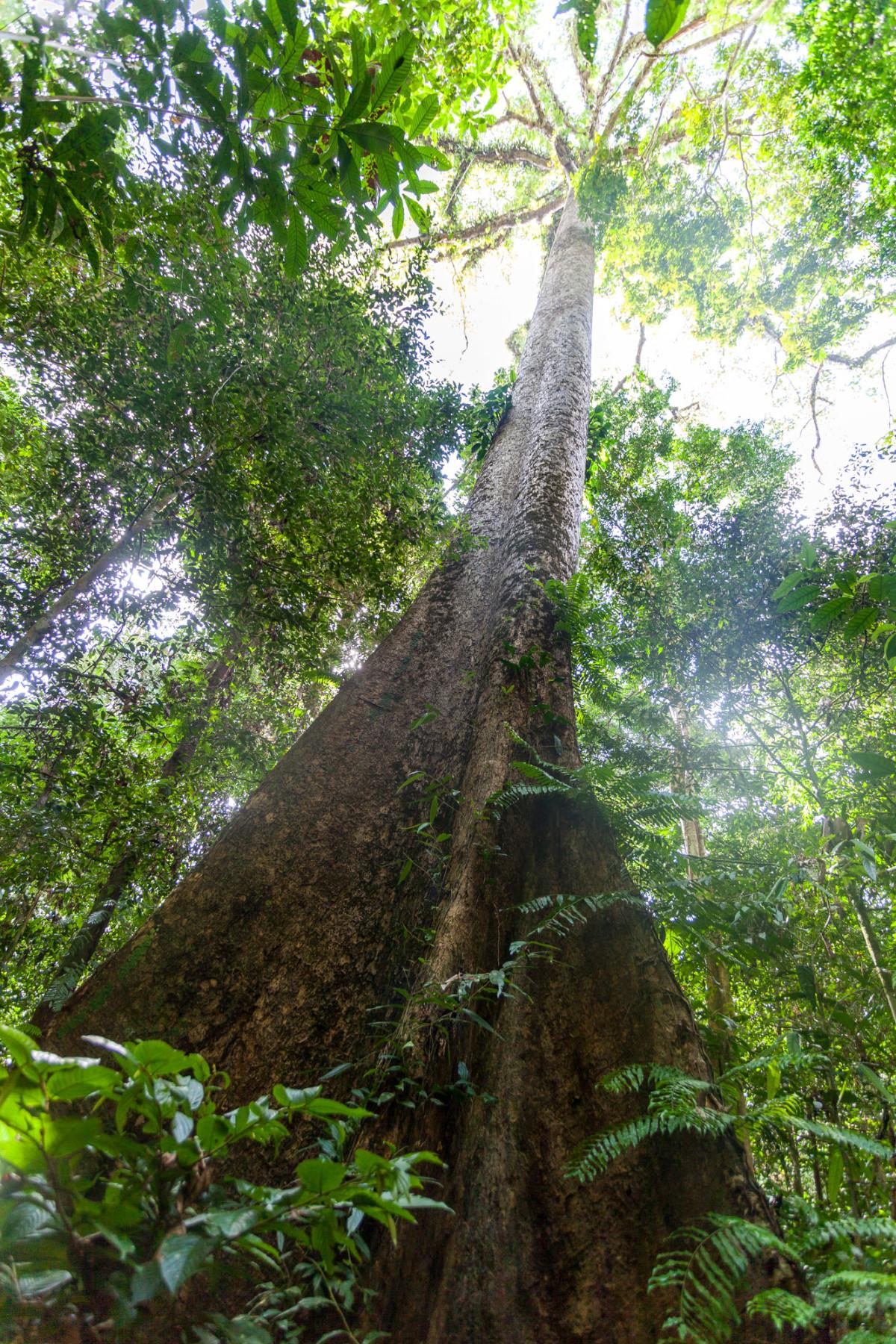Gunung-Mulu-National-Park-Borneo-21