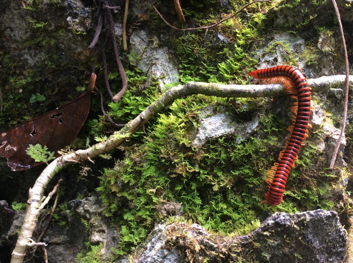 Gunung-Mulu-National-Park-Borneo-27