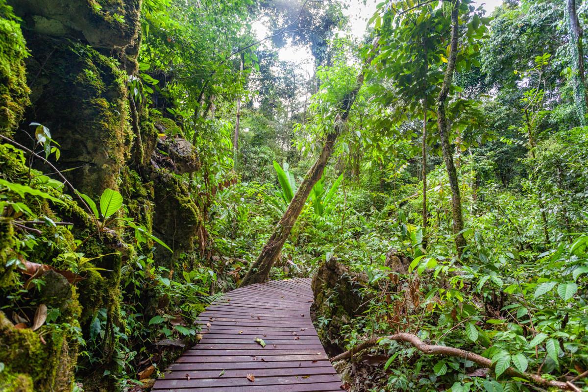 Gunung-Mulu-National-Park-Borneo-5