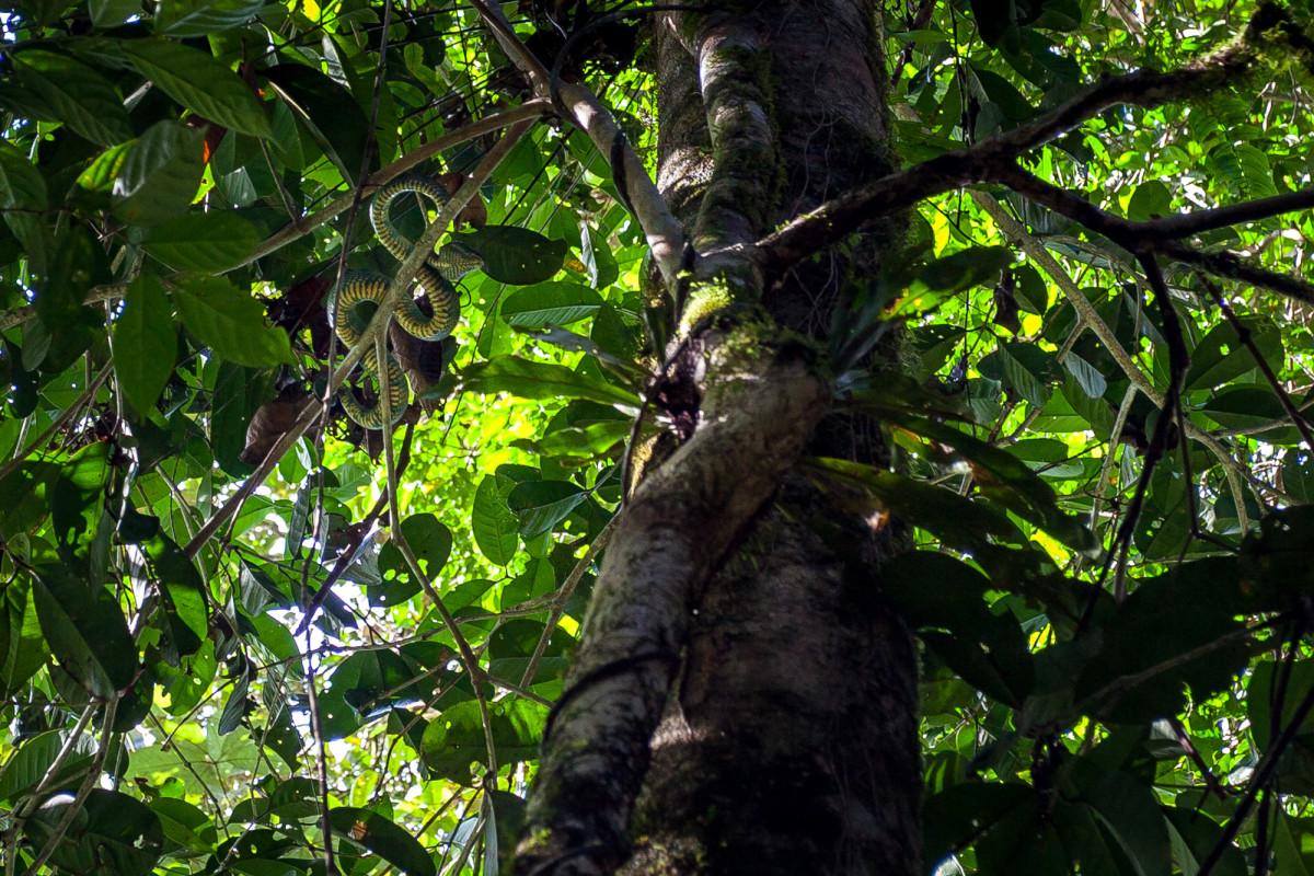 Gunung-Mulu-National-Park-Borneo-6