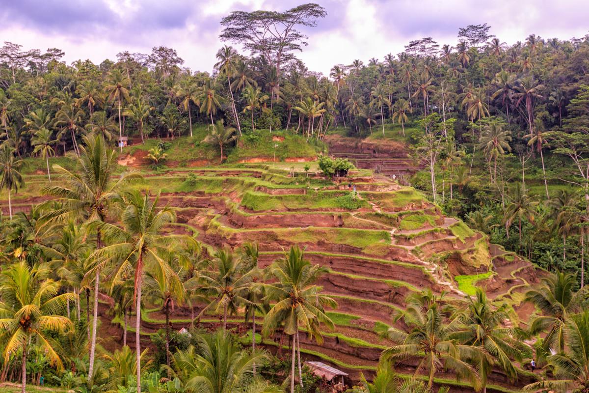 Kuta-Ubud-Bali-34