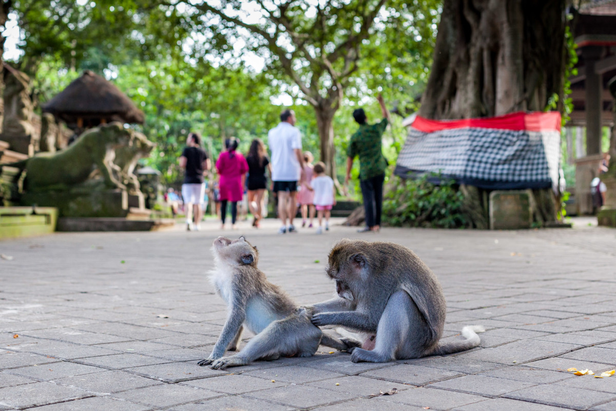 Kuta-Ubud-Bali-4