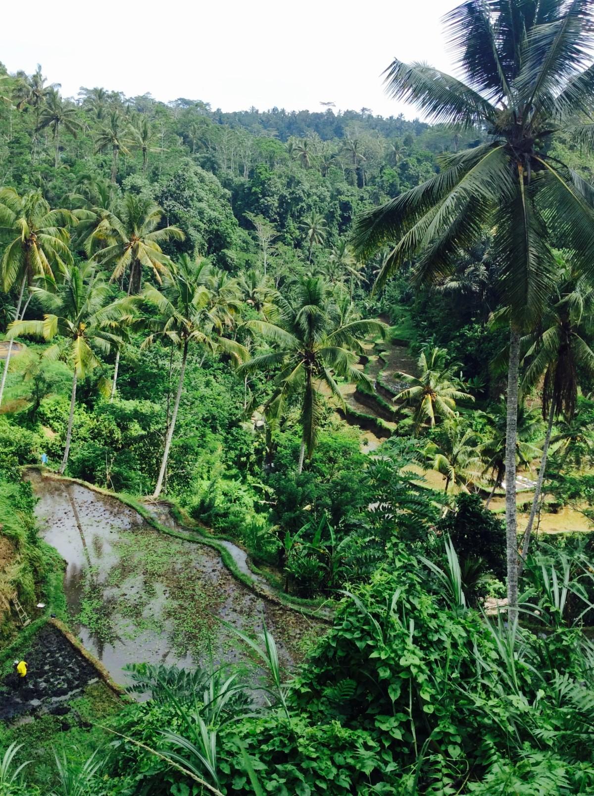 Kuta-Ubud-Bali-65