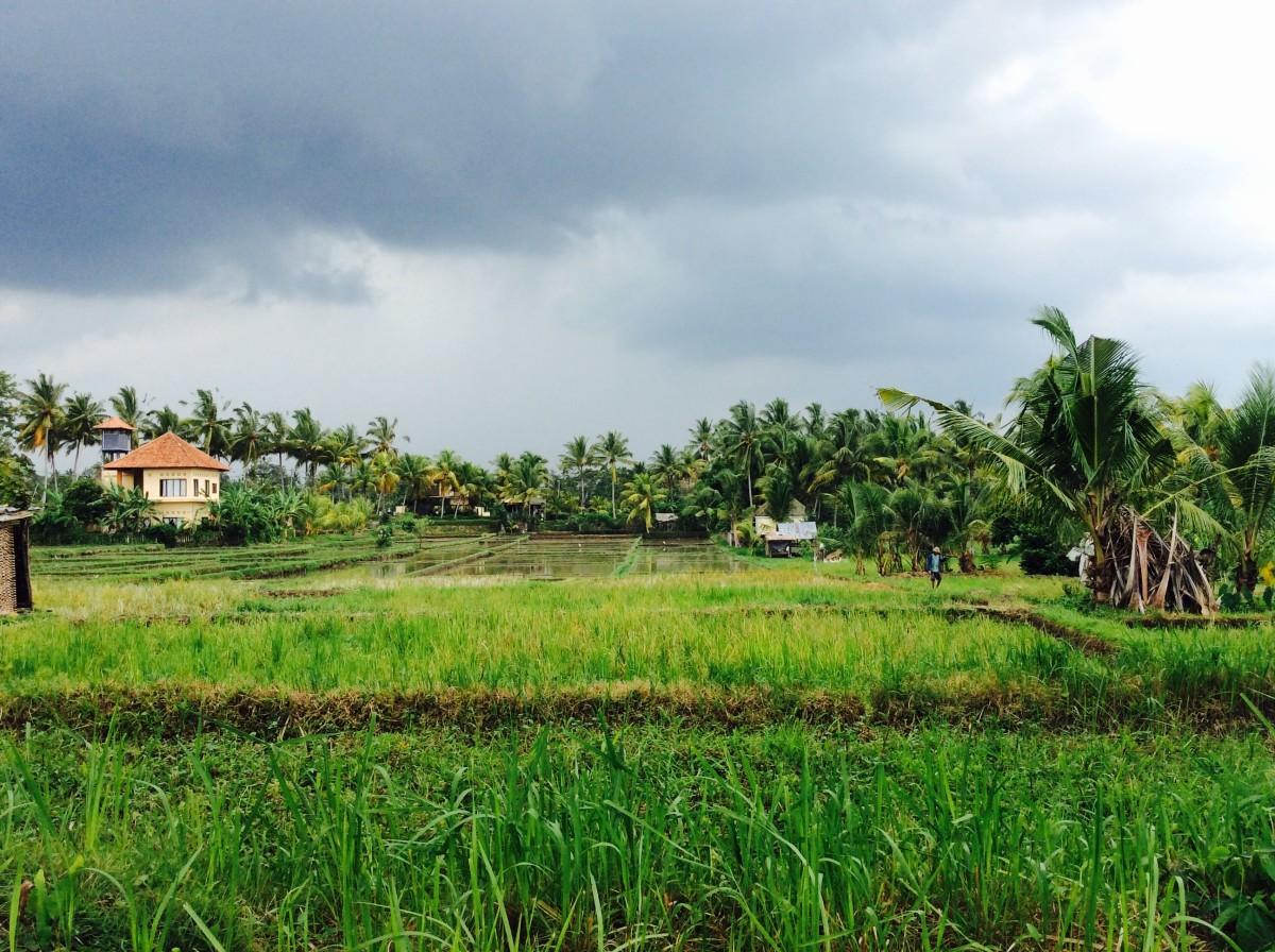 Kuta-Ubud-Bali-88