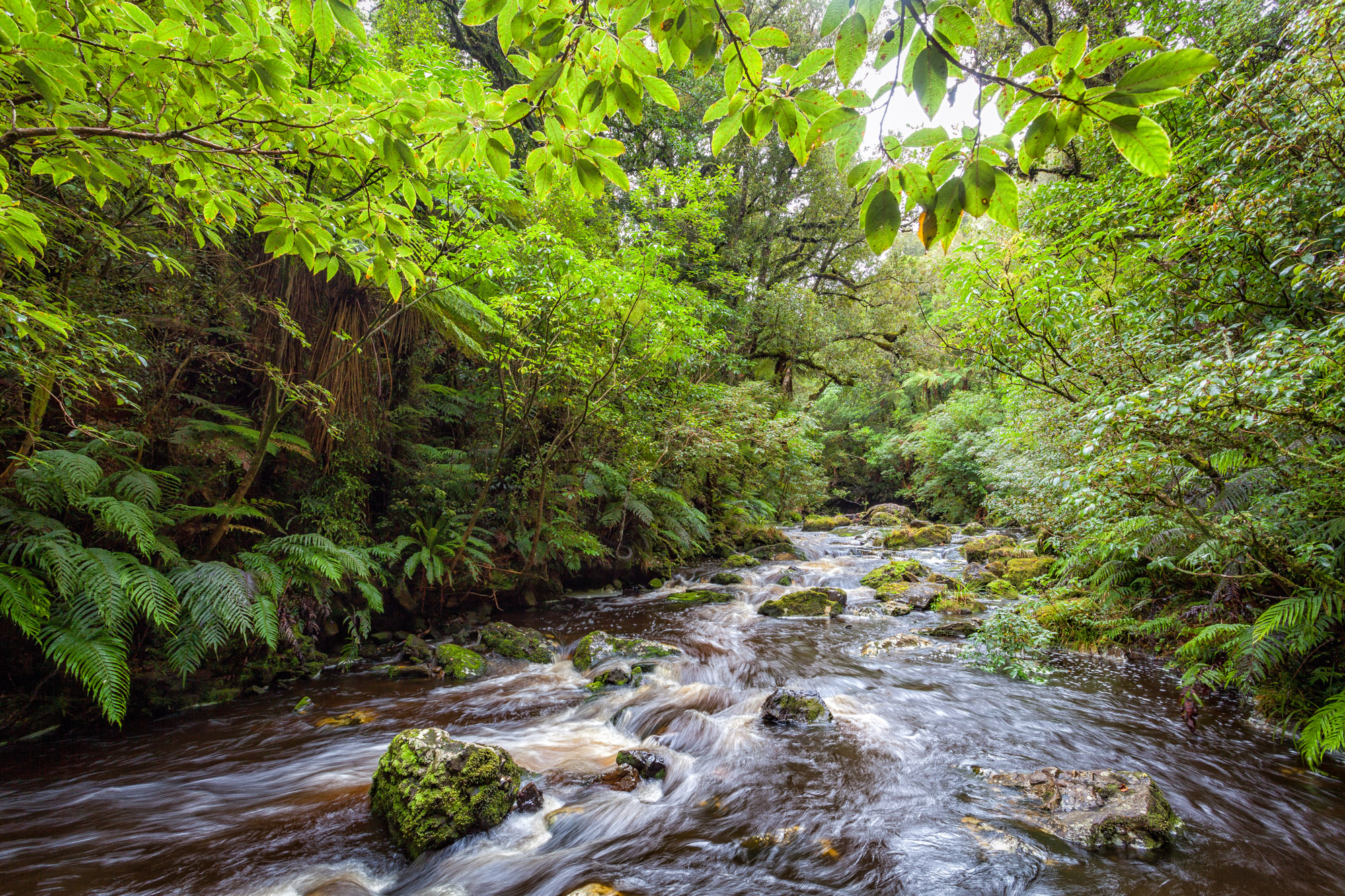 Man Cave Waipapa : Southern scenic route catlins