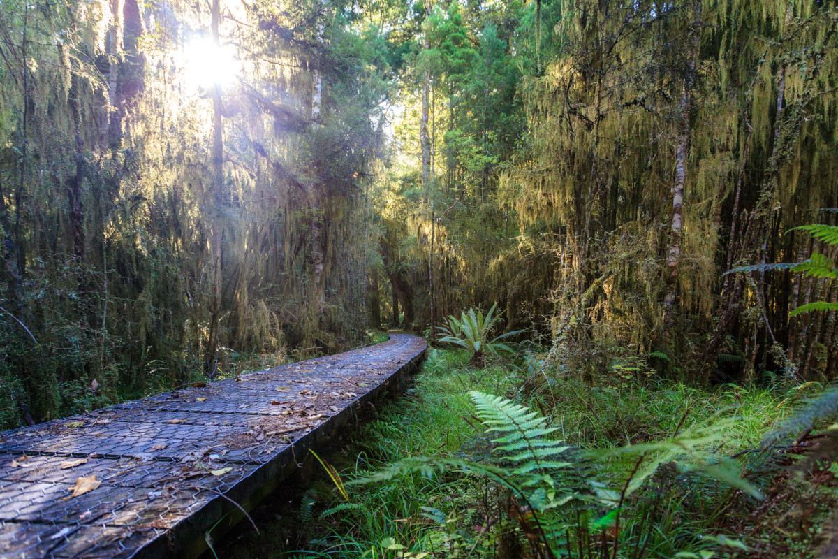 Southern-Scenic-Route-Western-Southland-Neuseeland-12