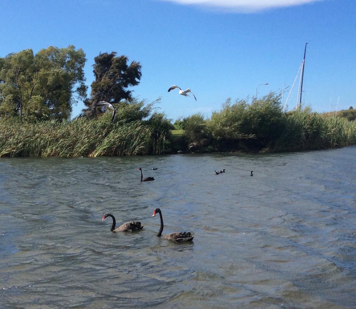 Lake-Taupo-Neuseeland-16