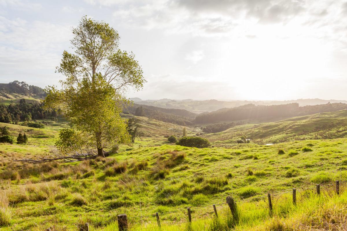 Ahipara-Rawene-Neuseeland-4