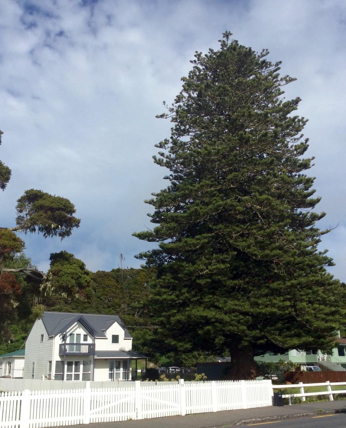 Paihia-Neuseeland-3