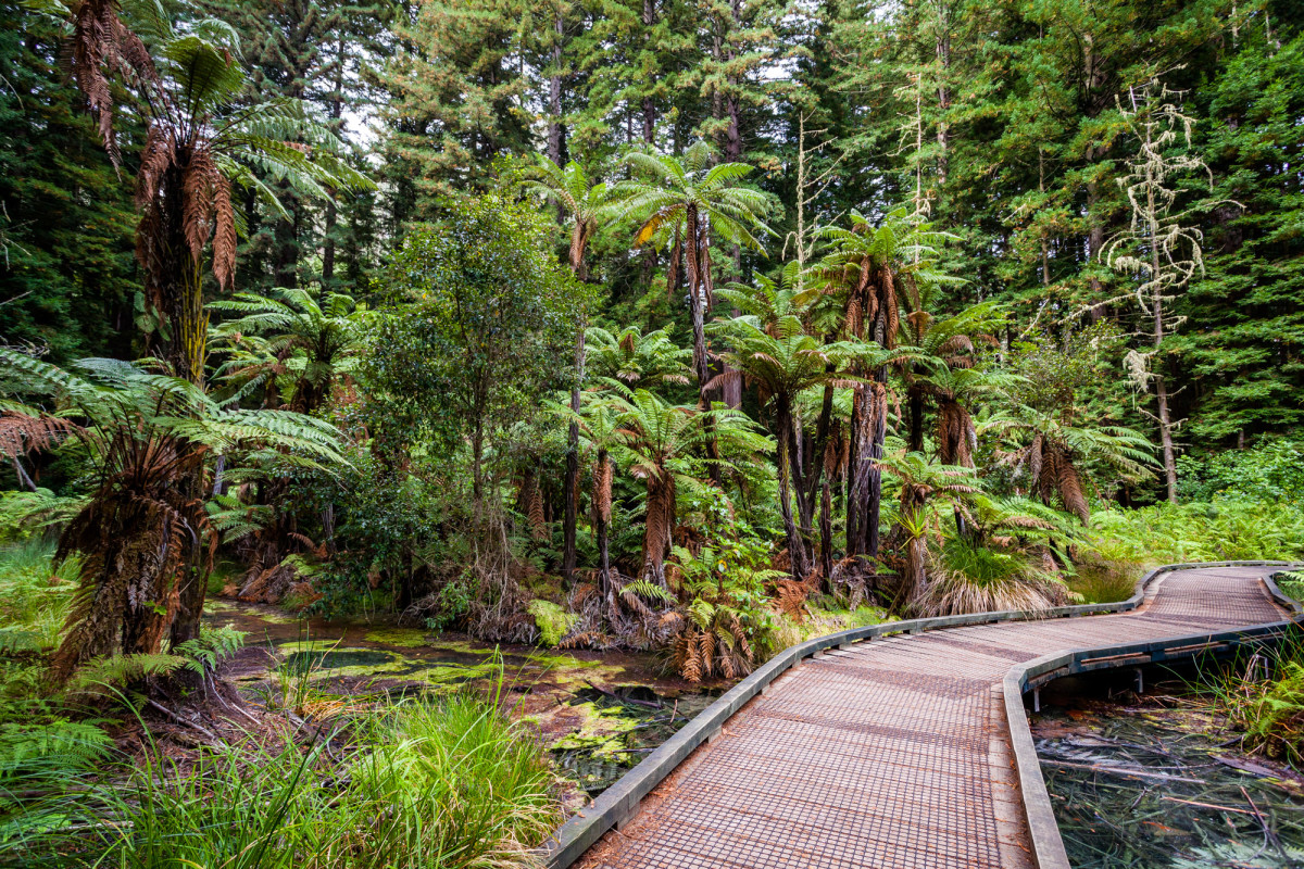 Rotorua-Neuseeland-8