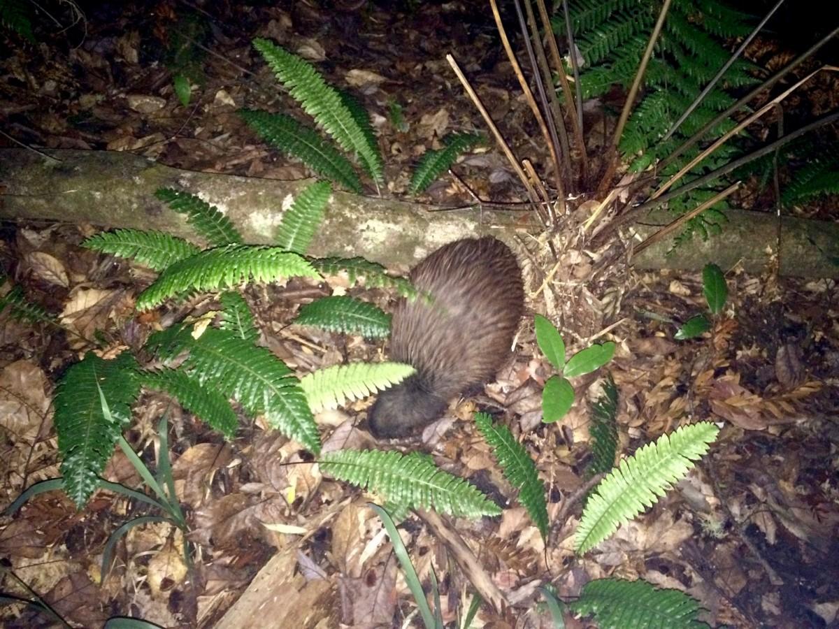 Waipoua-Kauri-Park-Neuseeland-5