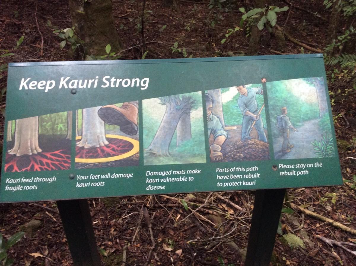 Waipoua-Kauri-Park-Neuseeland-7