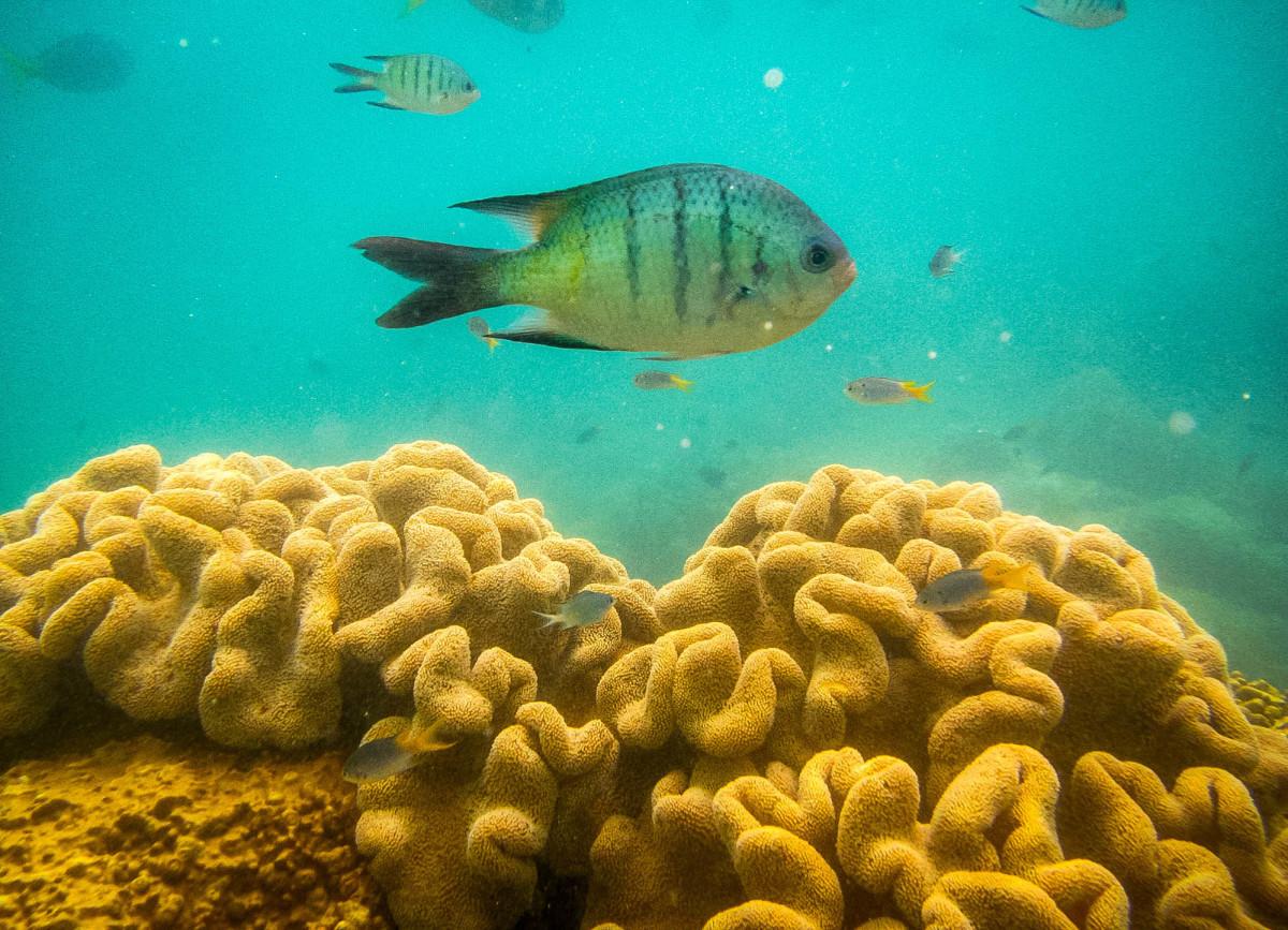 Whitsundays-Great-Barrier-Reef-Australien-10