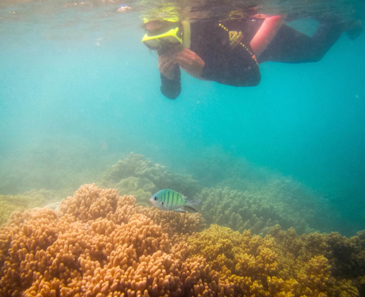Whitsundays-Great-Barrier-Reef-Australien-17