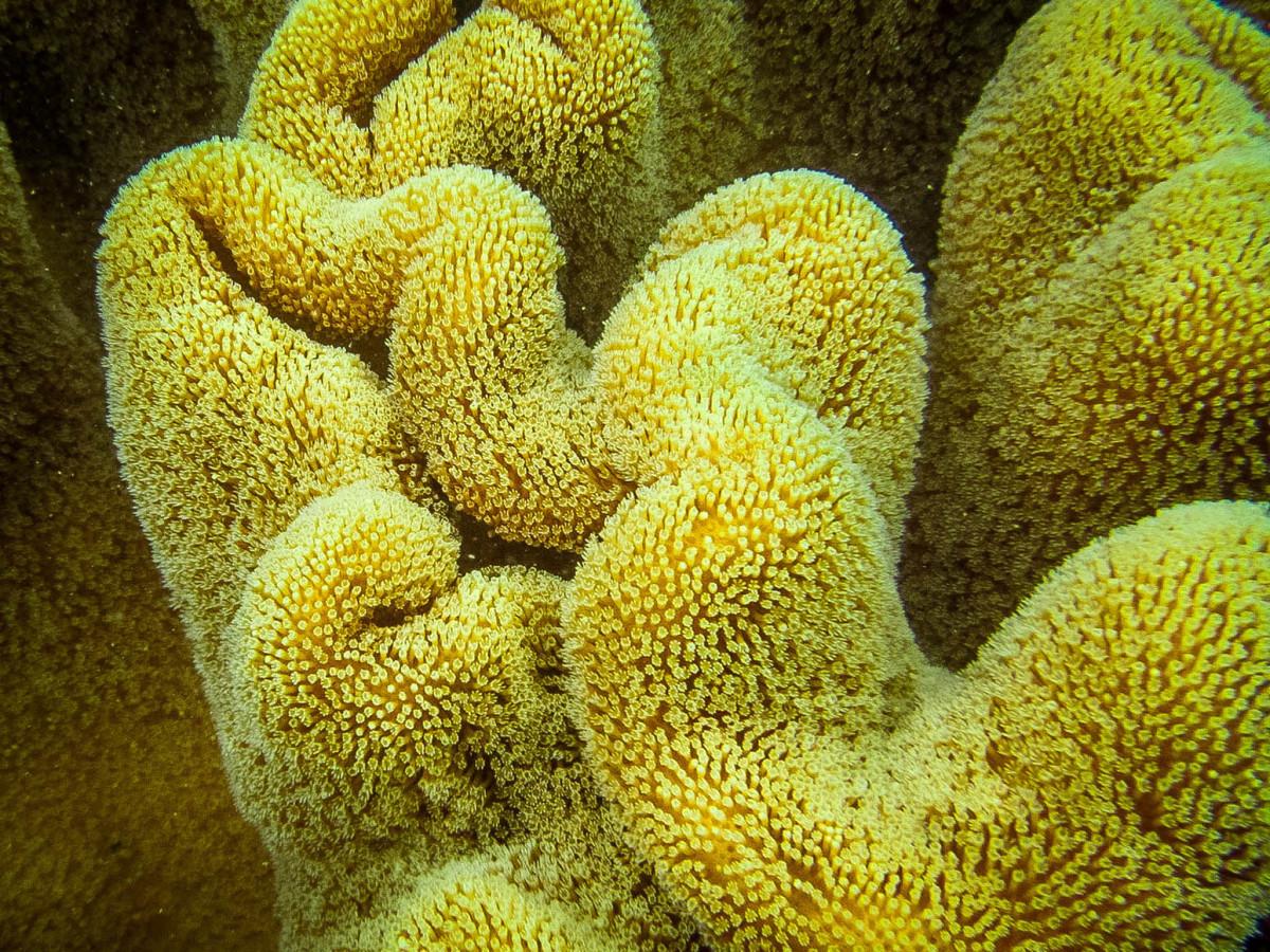 Whitsundays-Great-Barrier-Reef-Australien-3