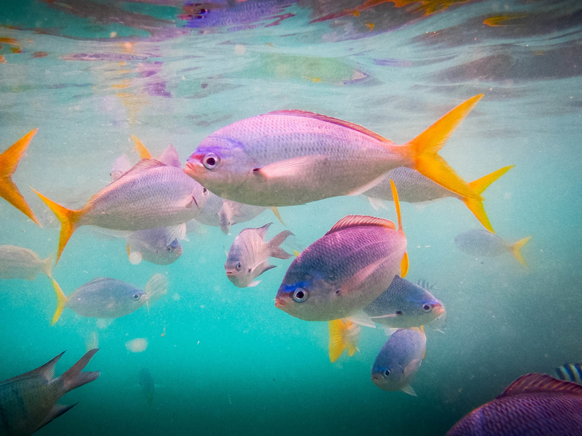 Whitsundays-Great-Barrier-Reef-Australien-5