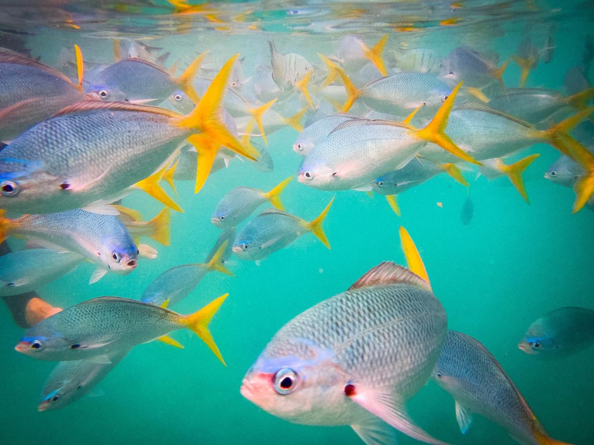 Whitsundays-Great-Barrier-Reef-Australien-9