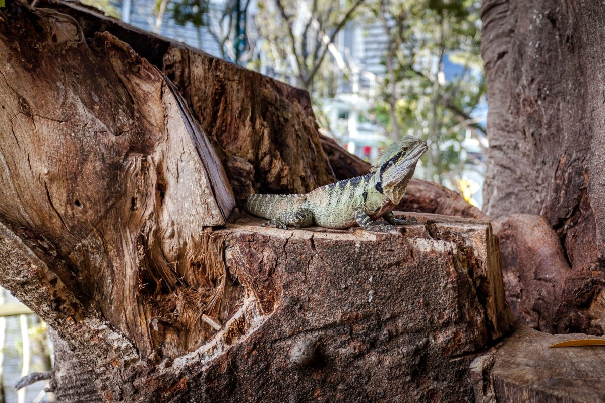 Brisbane-Australien-16