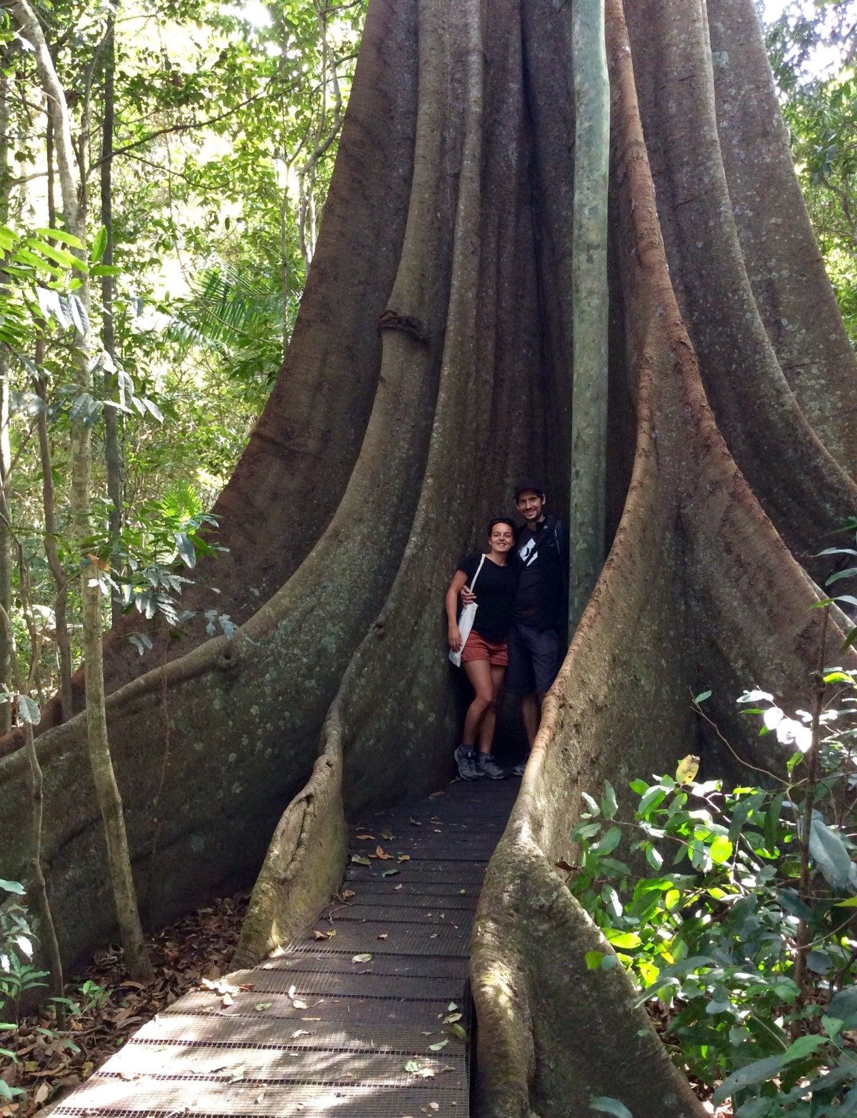 Fig-Tree-Walk-Australien-3