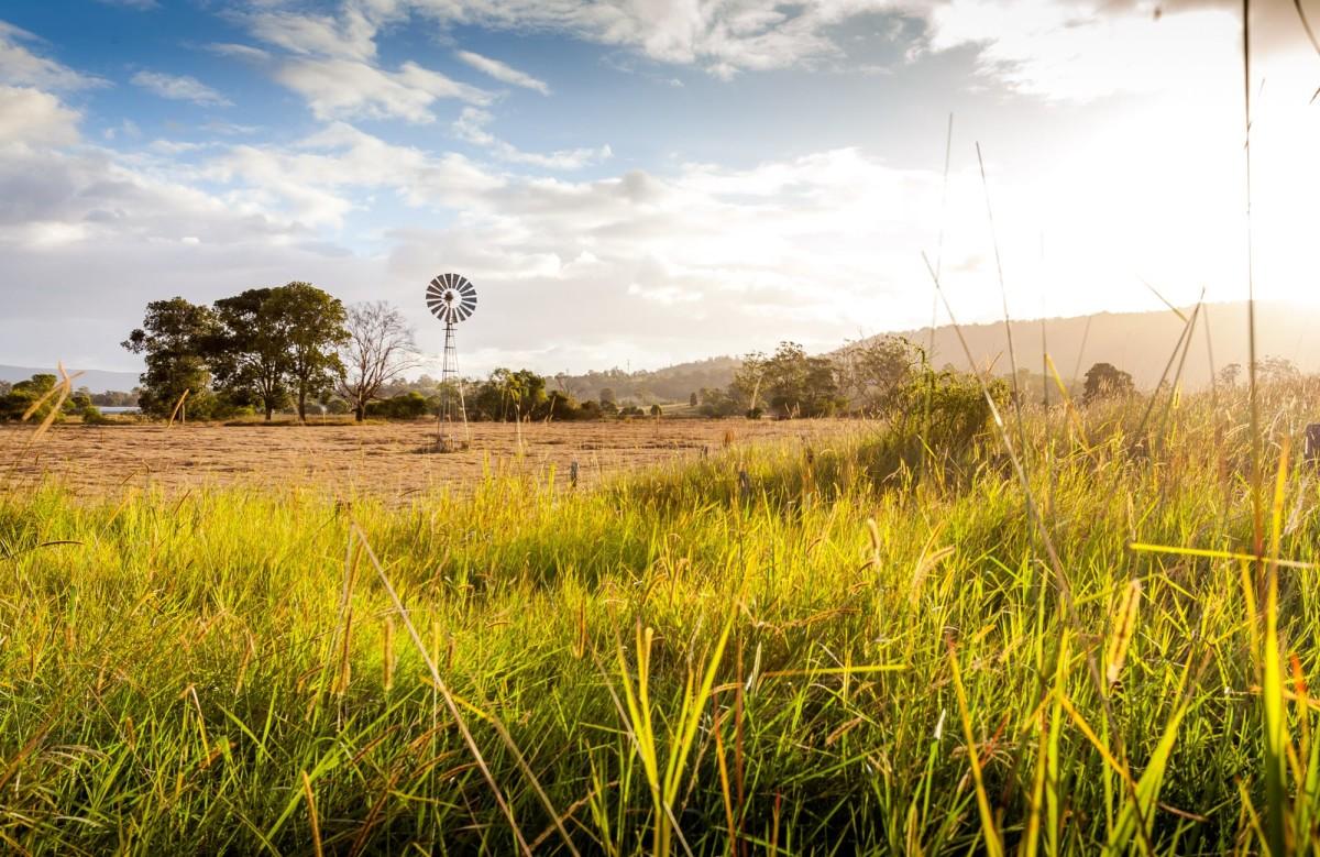 Maleny-Hinterland-Australien-4