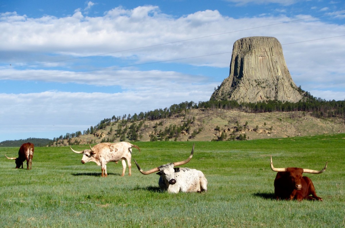 Devils-Tower-Wyoming-USA-16