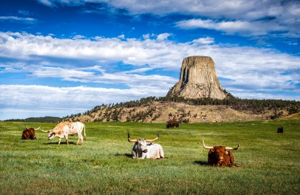 Devils-Tower-Wyoming-USA-Head