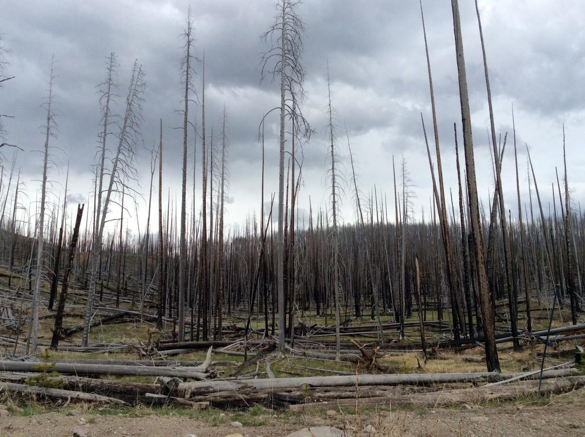 Yellowstone-Nationalpark-Wyoming-USA-27