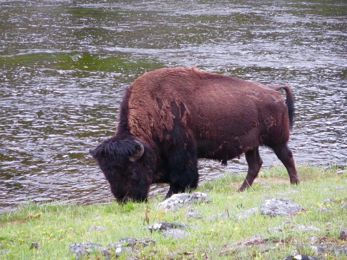 Yellowstone-Nationalpark-Wyoming-USA-33