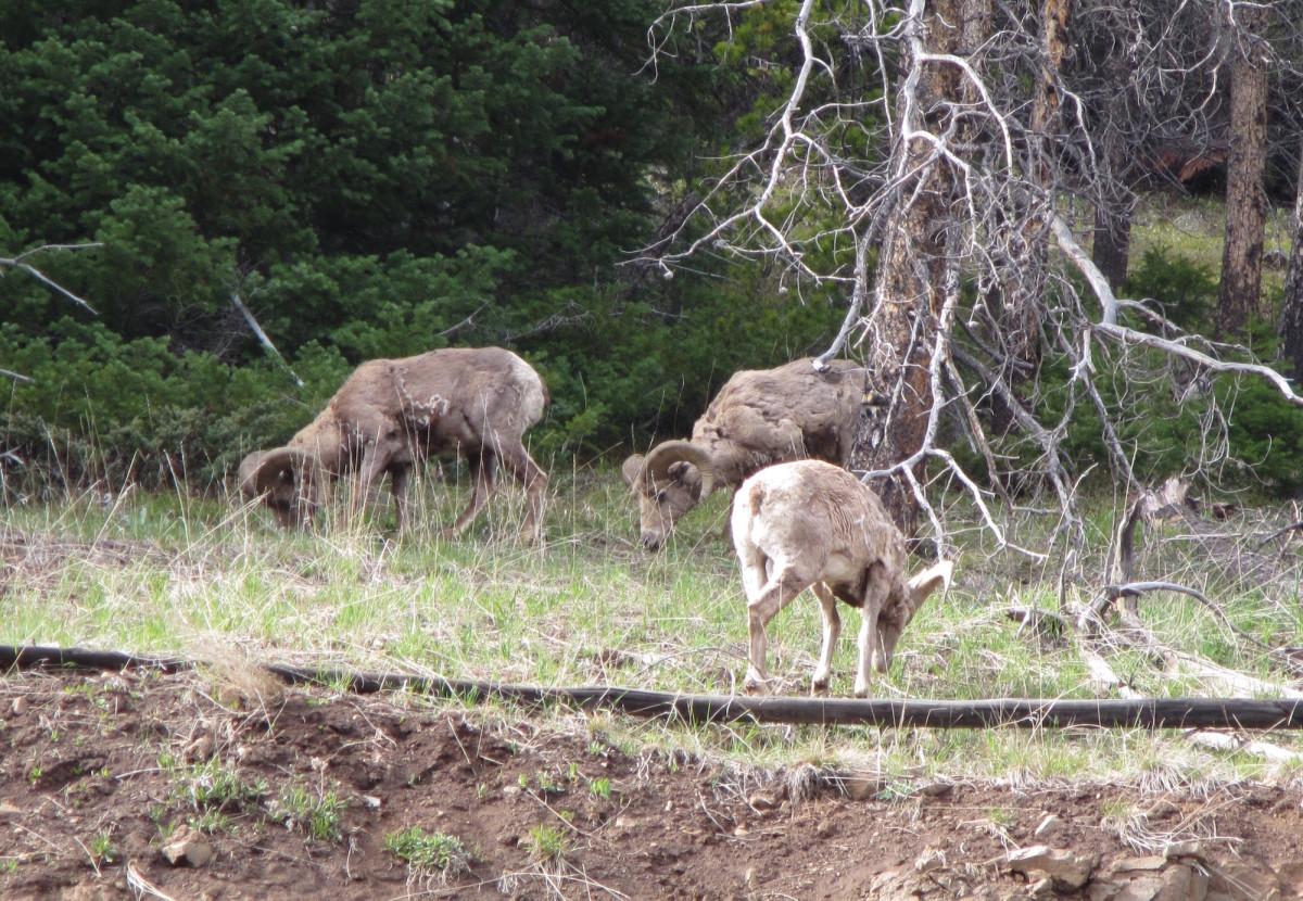 Yellowstone-Nationalpark-Wyoming-USA-42