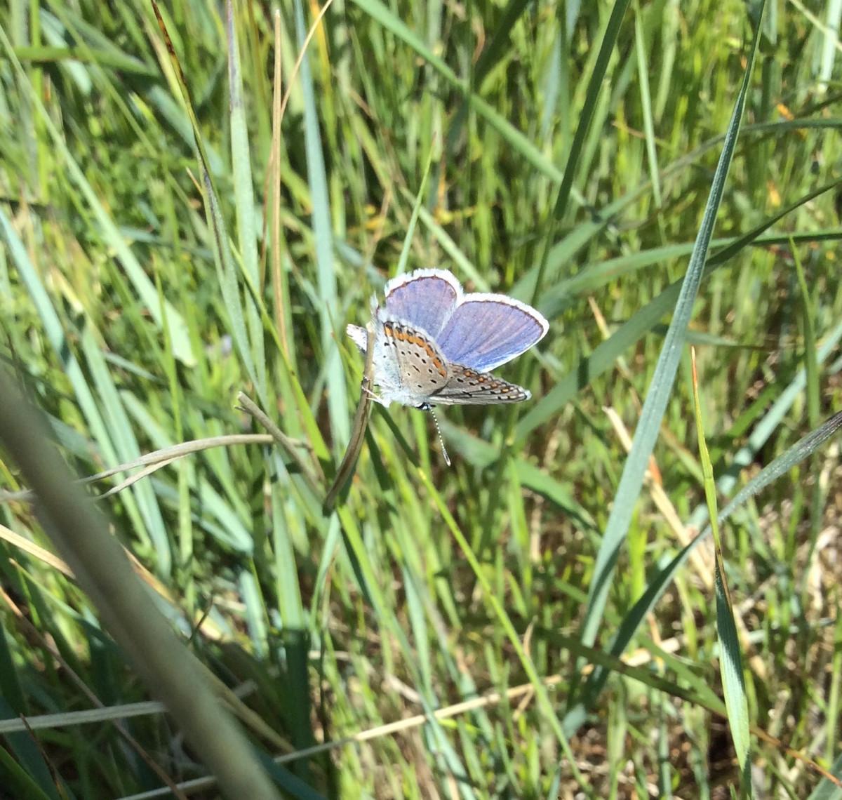 Badlands-Nationalpark-South-Dakota-USA-24