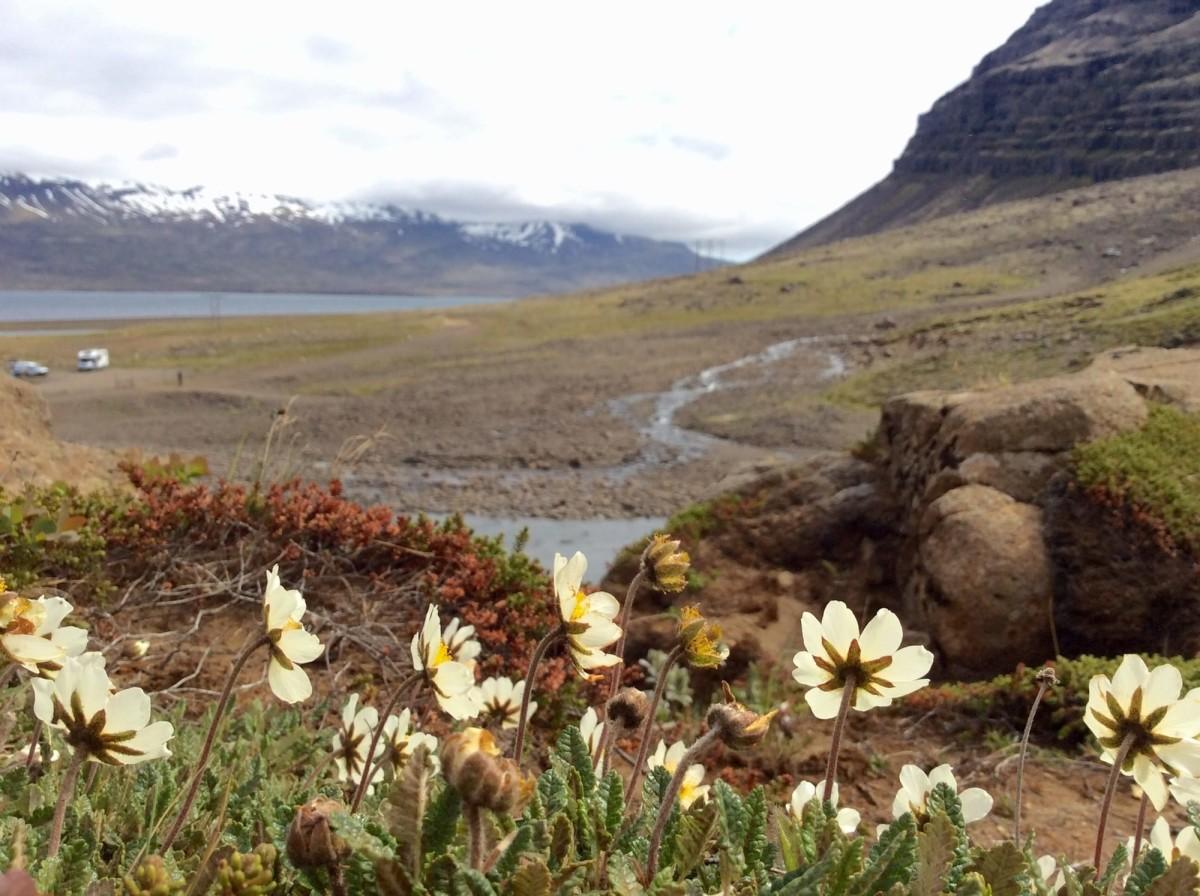island-sveinsstekksfoss-wasserfall-3